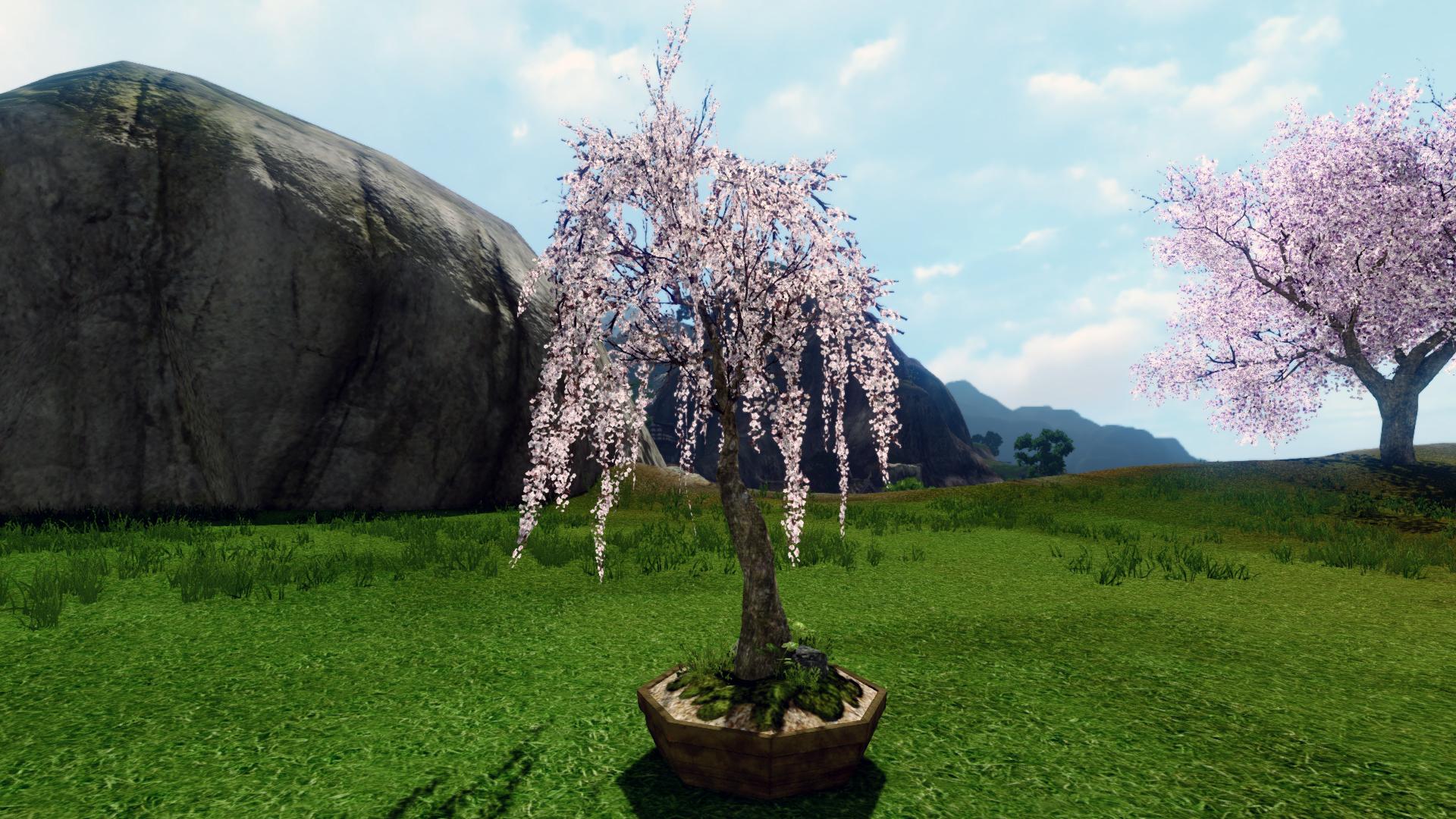 Вишневое деревце в кадке