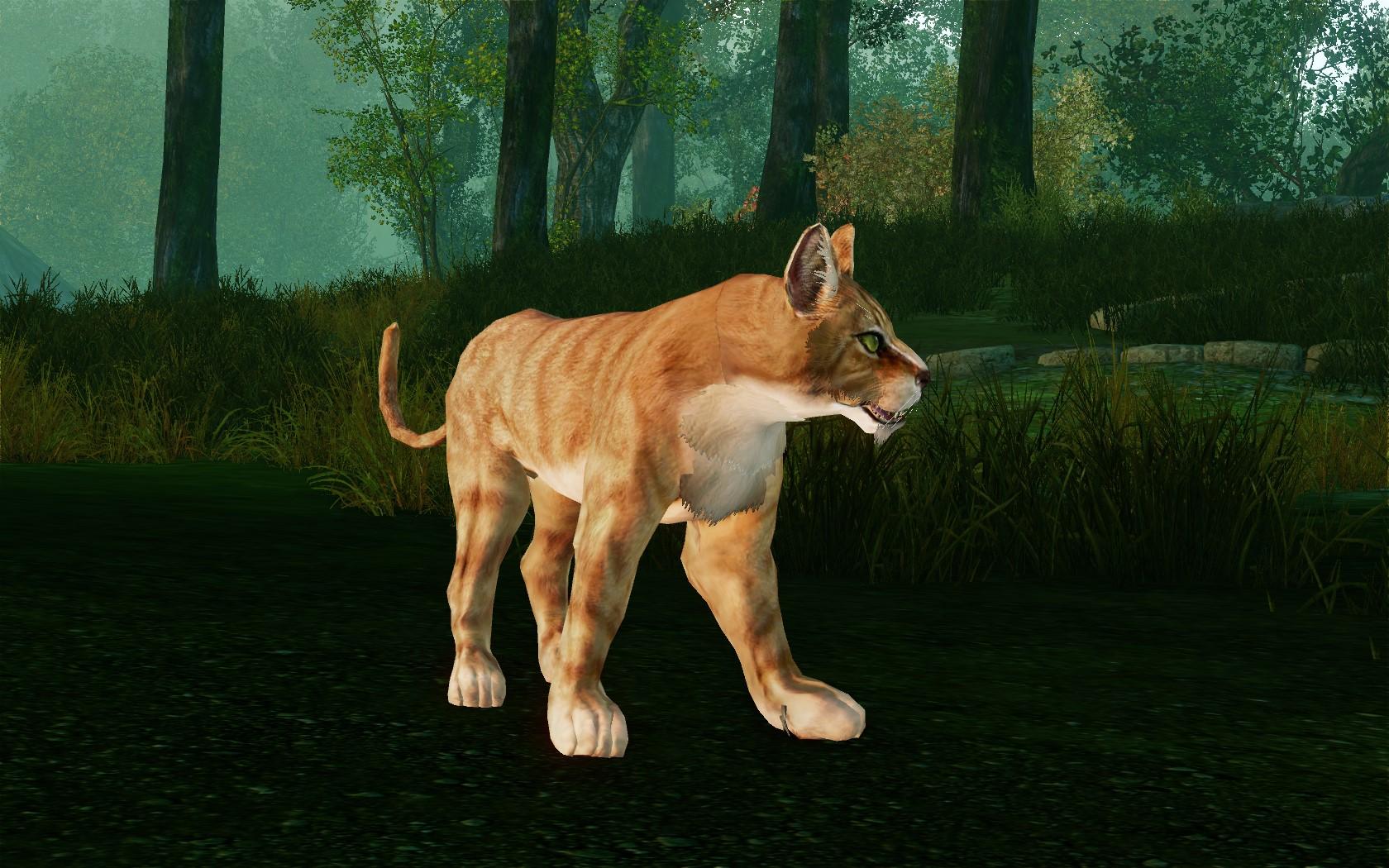 Рыжий камышовый кот