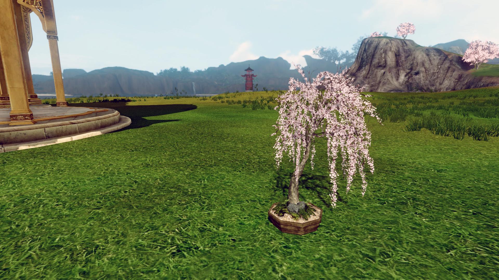 Маленькое вишневое деревце в кадке