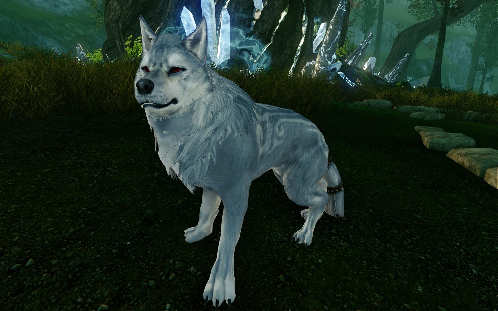 Белый волкопес